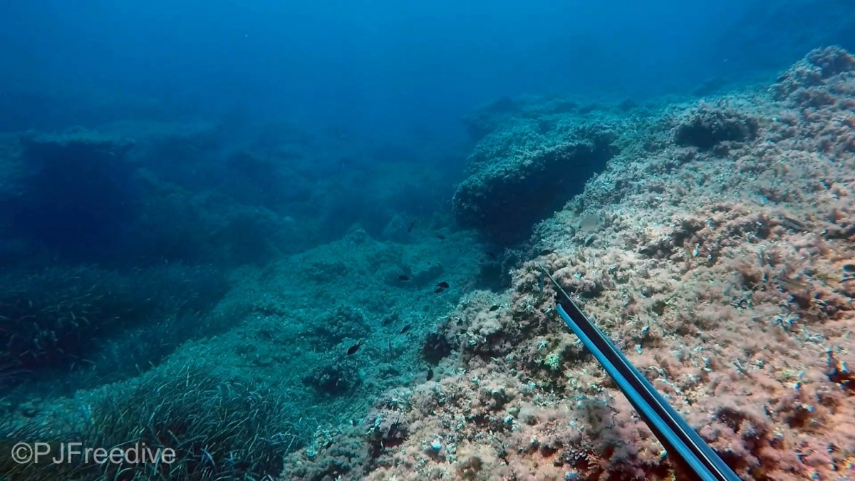 Spearfishing in Mallorca – What you need to know #1: Laws and regulations