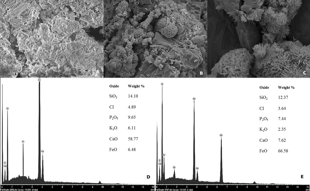 Bacterial Diversity and Composition in Oylat Cave (Turkey
