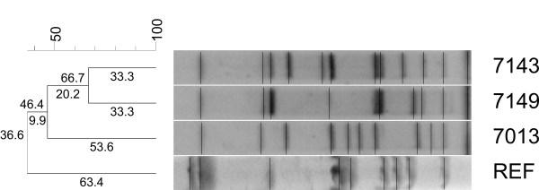 Brzyczy-Wołch et al fig 2