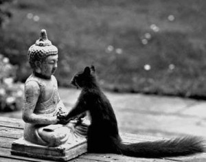 budda and squirrel
