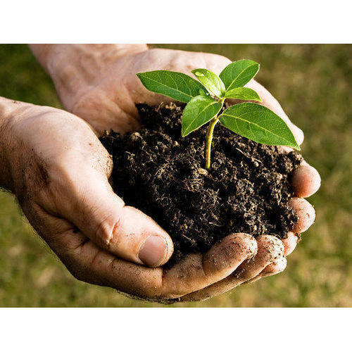 Organic Compost Fertilizer