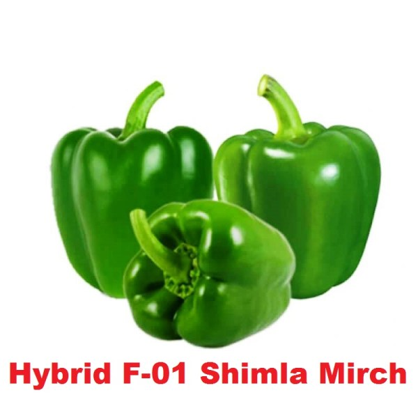 Hybrid F-01 Shimla Mirch Seeds