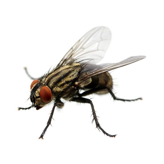 กำจัดแมลงวัน