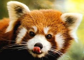 Firefox 4 prend encore du retard…