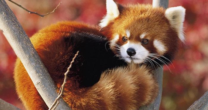 Firefox 5 passe en Release Candidate