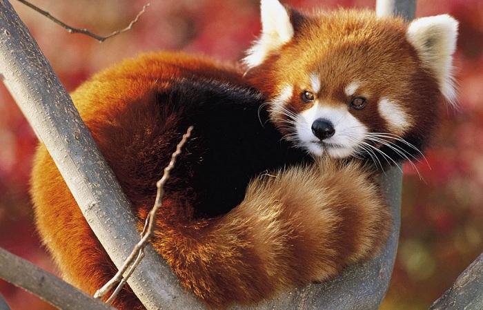Firefox 8 est déjà disponible en version beta