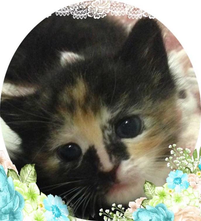 A Kitty Princess called Annabelle