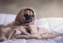Pet Friendly Hotels Near Me