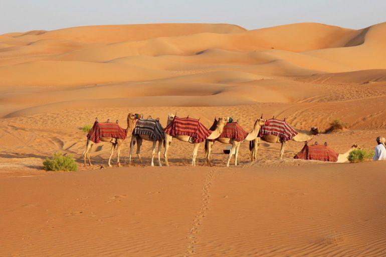 Your Expert Guide To Finding The Best Desert Safari Dubai