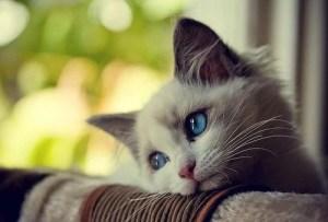 gatto-triste-23