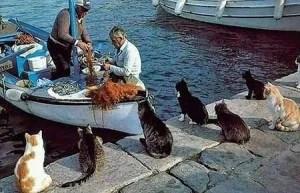 gatti e pescatori