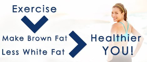 Brown fat vs white fat benefits image