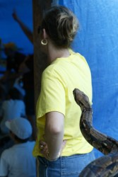 Snake attack Woman