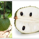 What In The World – South American Fruits