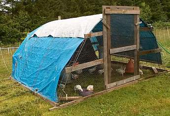 Better Than Chicken Tractors: Hoop Coops for Free Range Chickens