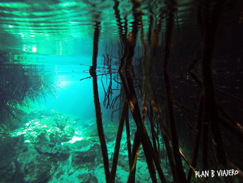 plan b viajero, cenote manati, cenotes tulum