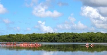 plan b viajero, lugares para visitar cerca de Merida, reserva celestun, flamencos yucatan