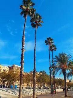 Barcelonská pláž s palmami