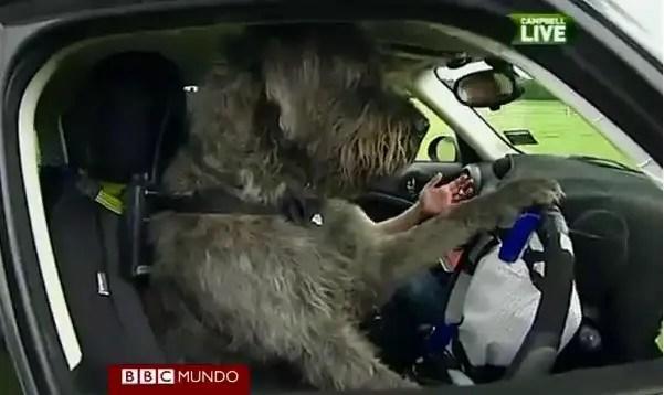 Monty perro al volante