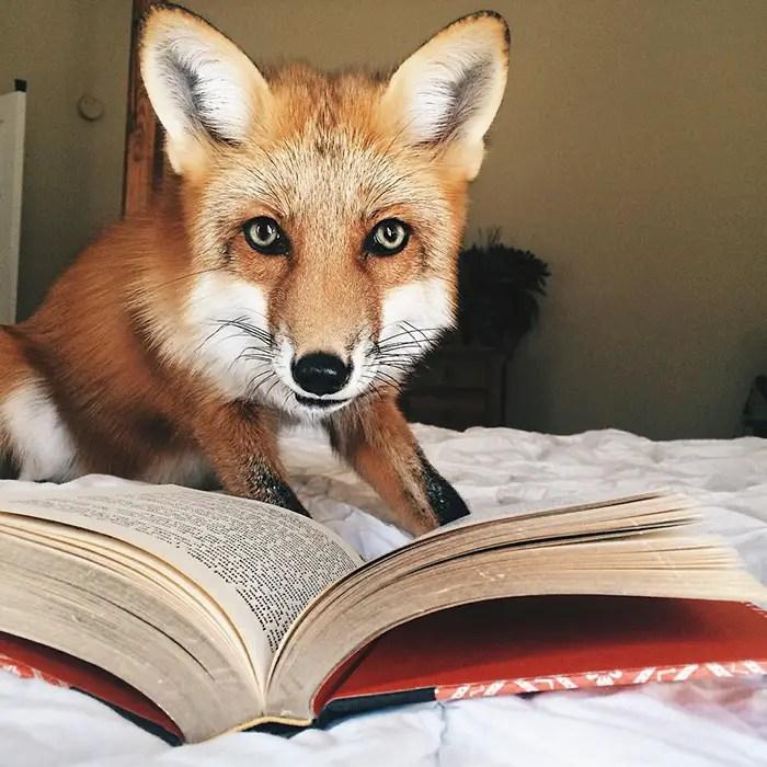 juniper-fox-happiest-instagram