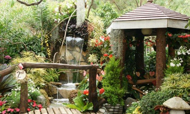 Jardín Feng Shui: Armonía, equilibrio y belleza