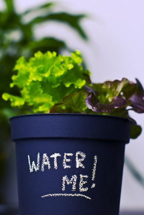 cuidado de plantas a la hora de regar