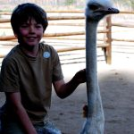 Win a Family Safari in Africa with video competition