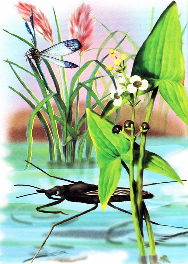 муравей и водомерка
