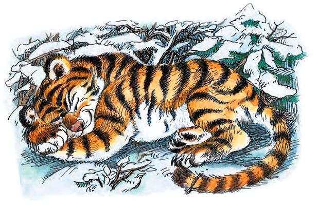 Окружил его тигрёнок своими мягкими лапами, положил на лапы голову, да и заснул под вой метели