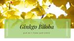 Para que sirve el Ginkgo Biloba