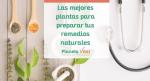 Las mejores plantas para preparar tus remedios naturales