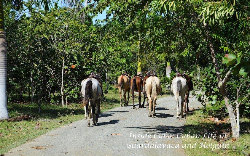Inside Cuba: Cuban Life in Guardalavaca and Holguin