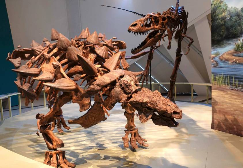 Royal Ontario Museum: What you need to see and do!