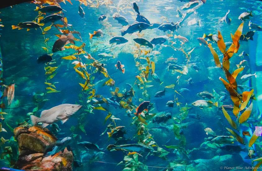 Ripley's Aquarium Rainbow Reef