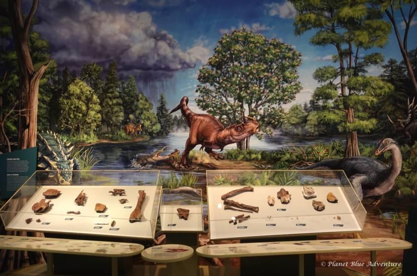 Royal Ontario Museum Zuul Dinosaur