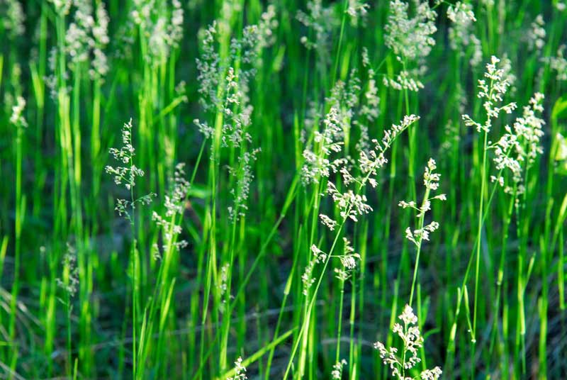 Green Grass with Light - Catherine Pawasarat