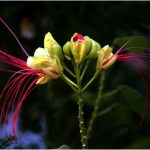 fleurs-couleurs-karuna