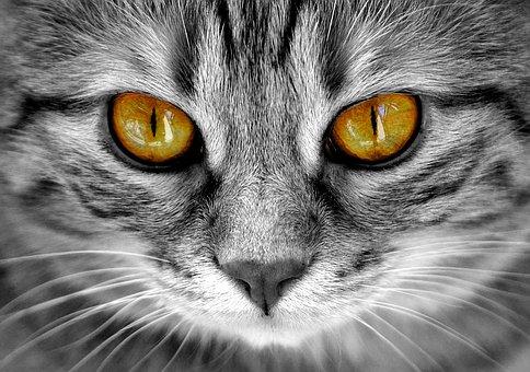 cat-2807043__340