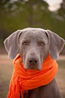 Assurance Santé pour animaux
