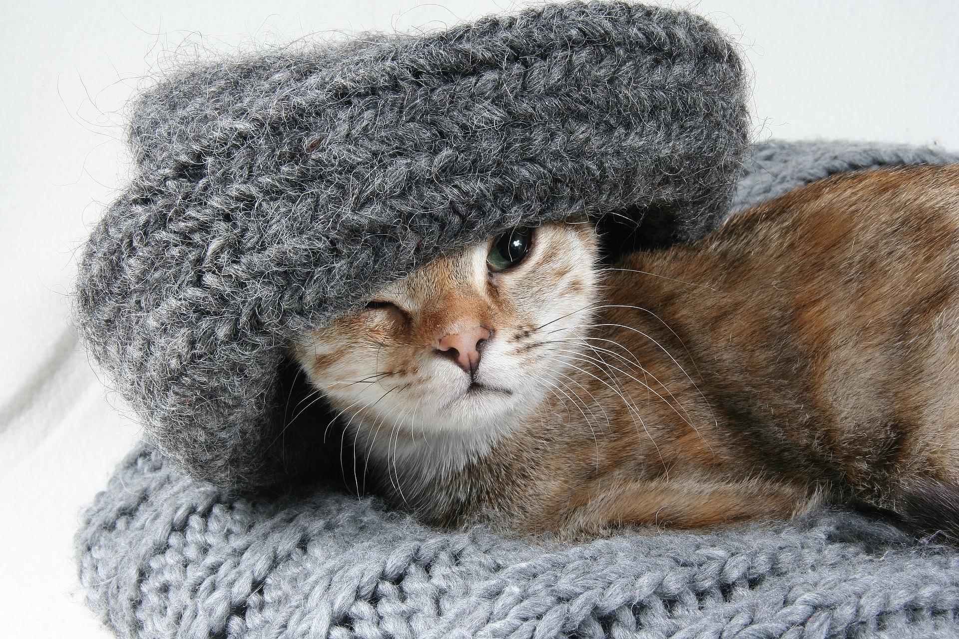 chat en hiver