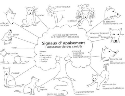 communiquer avec son chien