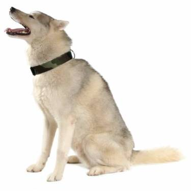 chiens-bobby-collier-chien-husky-camouflage