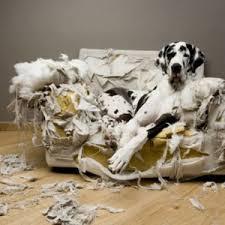 Mon chien est destructeur ?