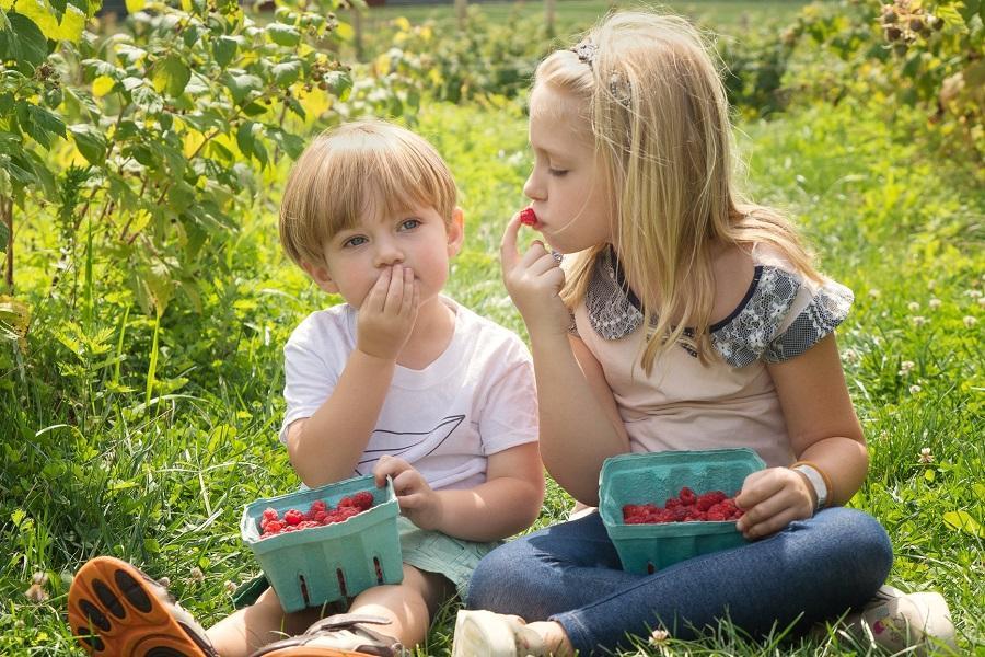Menthe et Primevère - box découverte nature pour enfant