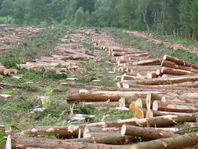 Deforestation (Source: Creative Commons)