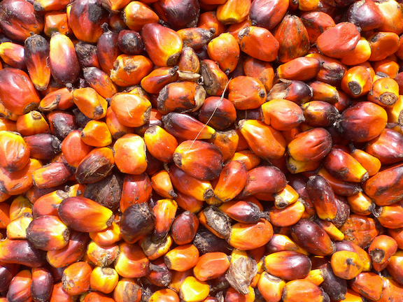 Palm oil is derived from palm nuts, the fruit of oil palm trees.