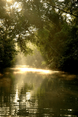 The Sundarbans in Bangladesh (Image: Creative Commons)