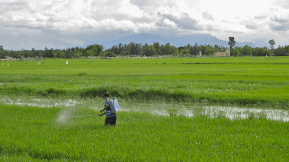Spraying pesticide on rice in Hội An, Quảng Nam, Vietnam. (Image Credit: Flickr)