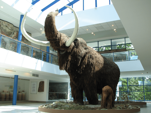 A lifesize model of a Woolly Mammoth in the Brno museum Anthropos. (Image: WikiMedia Commons)