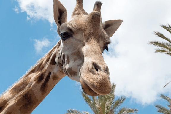 The giraffe's smile. (Image Credit: Pixabay)